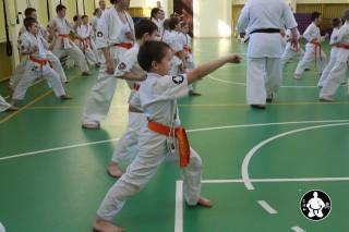 киокушинкай экзамены (73)