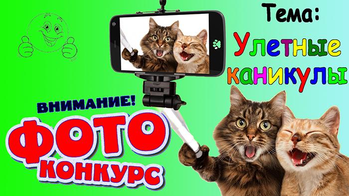 кот фото конкурс2